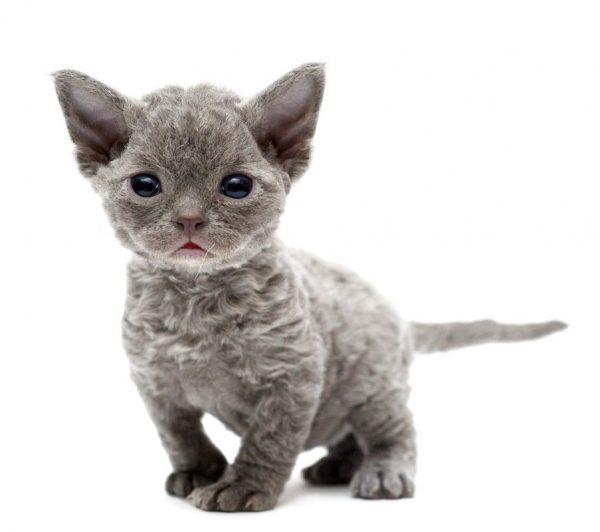 Котёнок, у которого только что открылись глазки
