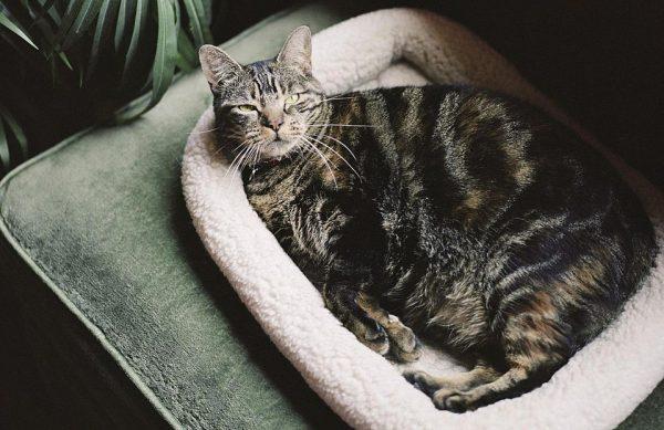 Место отдыха для беременной кошки