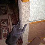 Кот царапает угловую когтеточку