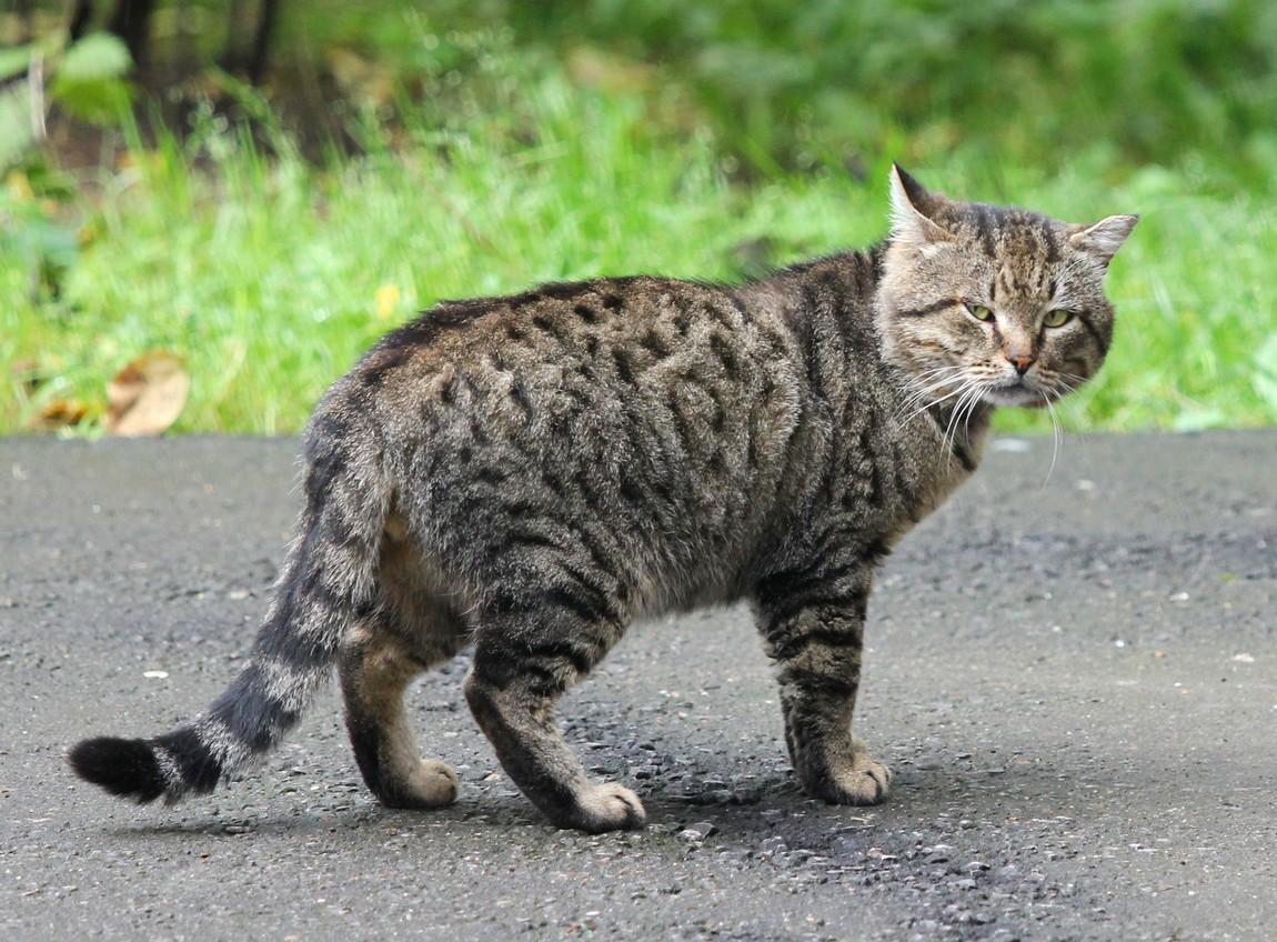 коты дворняги порода видно названия, дизайнеры
