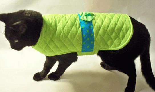Кошка в защитной попоне