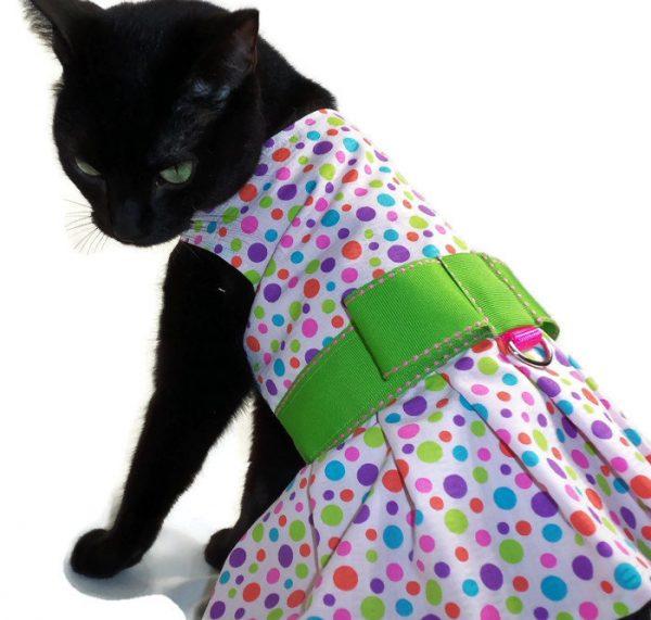 чёрная кошка в платье в цветной горожек