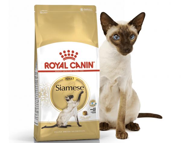 Корм Ройал Канин и сиамская кошка