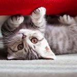 Котёнок под диваном