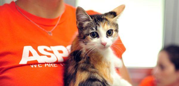 Волонтёр ASPCA держит котёнка