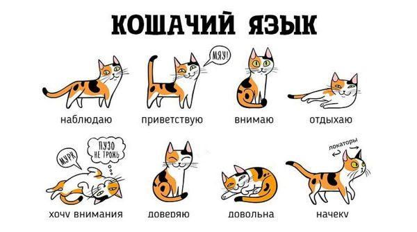 Азбука кошачьего поведения
