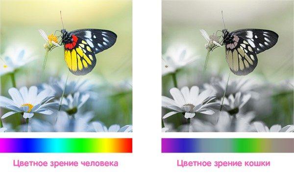 Цветовосприятие кошки — схема