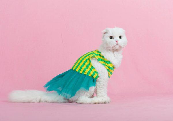 белая кошка в платье с бирюзовым шлейфом