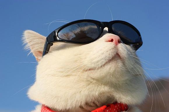 белый кот в солнцезащитных очках
