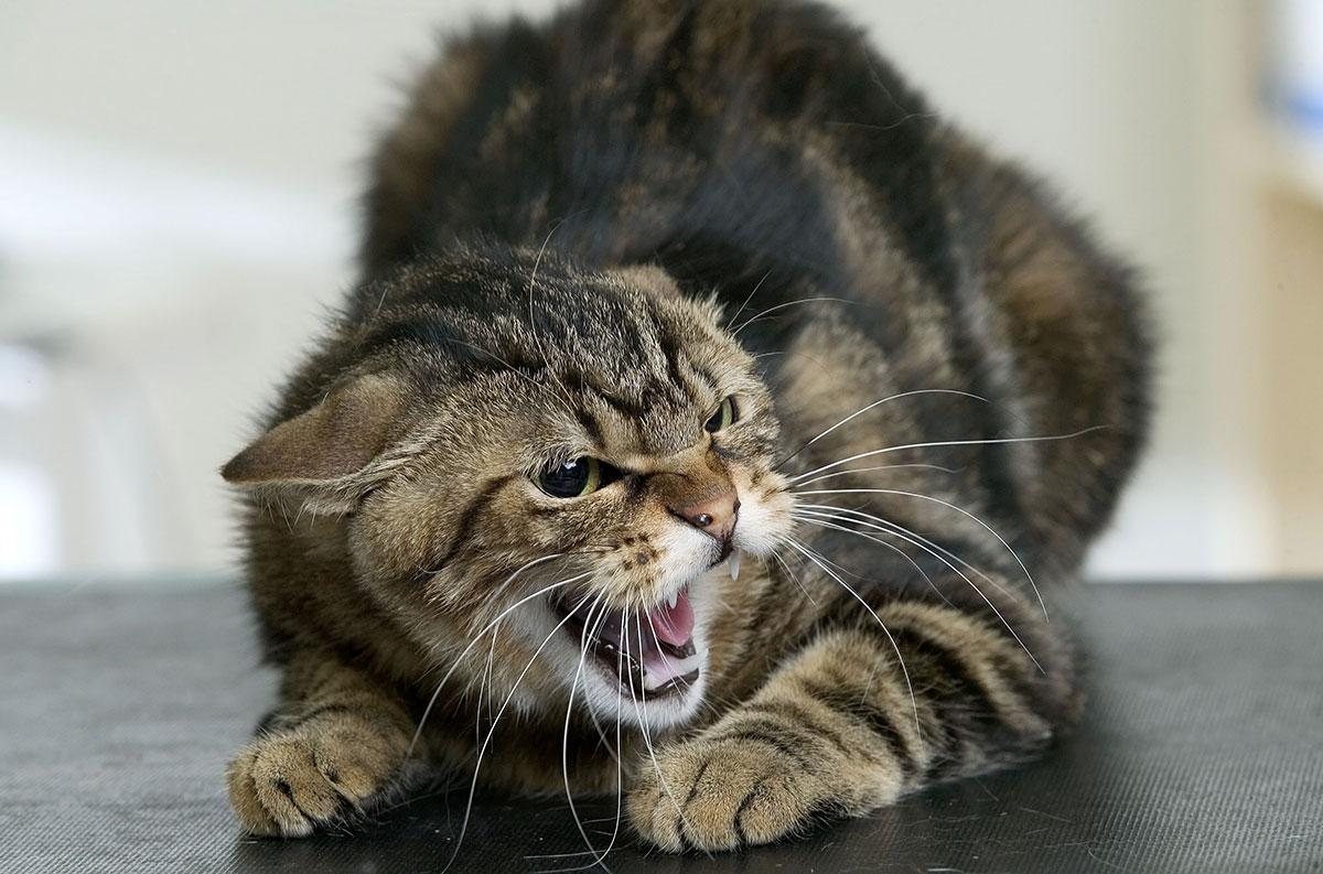 Укусила кошка
