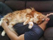 Большой кот лежит на человеке