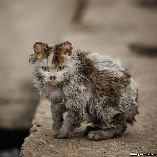 Грязная бродячая кошка