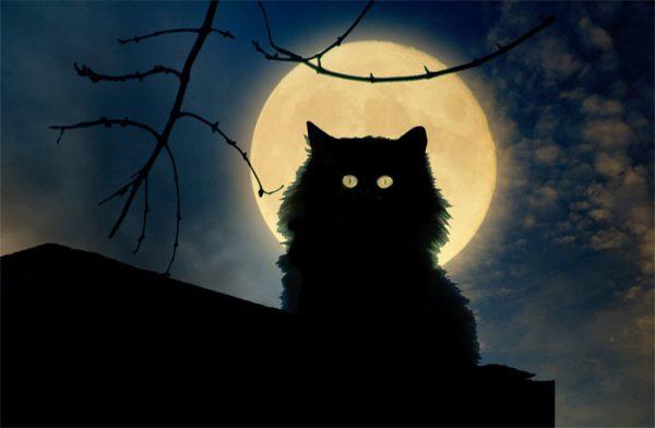 Чёрный кот на фоне луны