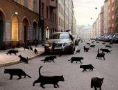чёрный кот переходит дорогу