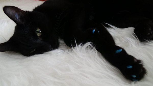 чёрный кот с антицарапками на белом меху