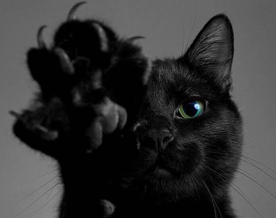 Чёрный кот с когтистой лапой