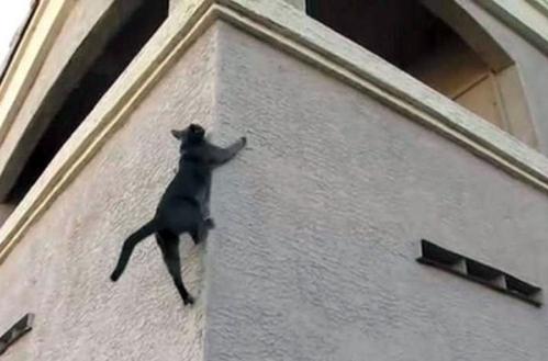 чёрный кот взбирается по каменной стене здания