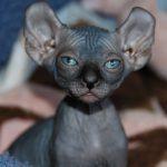 чёрный котёнок эльф