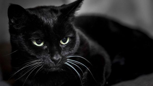 Чёрный зеленоглазый кот