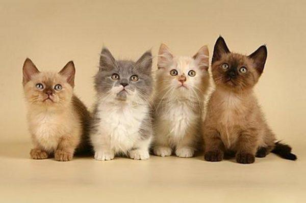 Четыре котёнка
