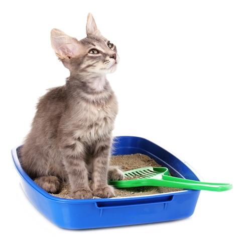 Чистка кошачьего туалета
