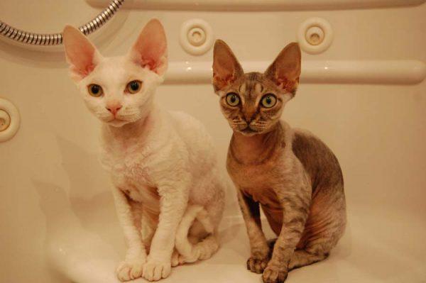 Девоны сидят в ванне