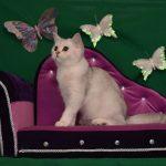 Диван для кошки необычной формы