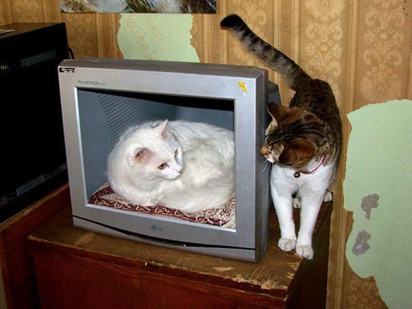 Дом для кошек из монитора