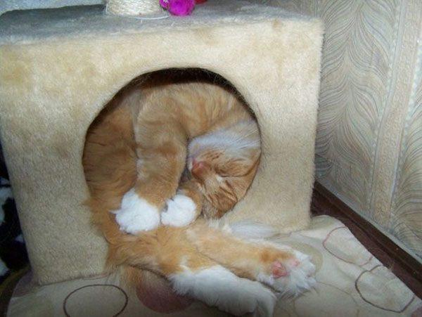 Дом для кошки не по размеру