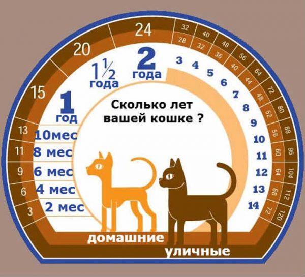 Схема сравнения возраста кошки с возрастом человека