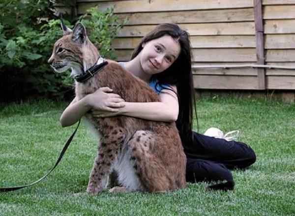 Девочка обнимает домашнюю рысь