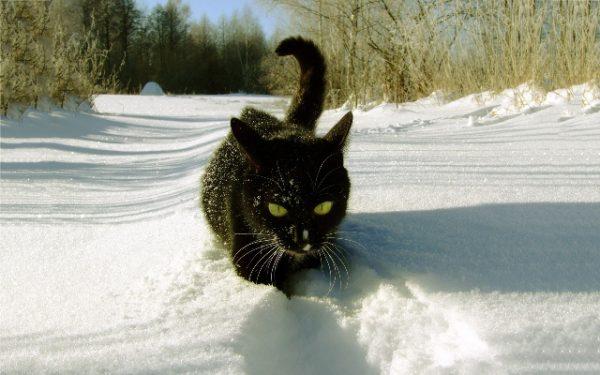 кот идет по снегу