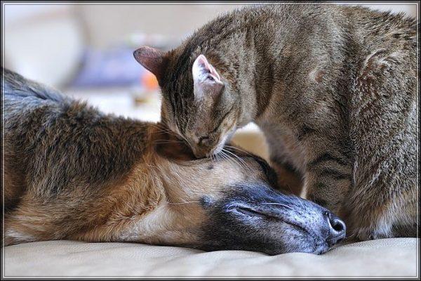 Кот нюхает голову собаки