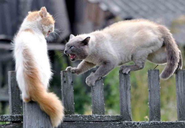 два кота на заборе