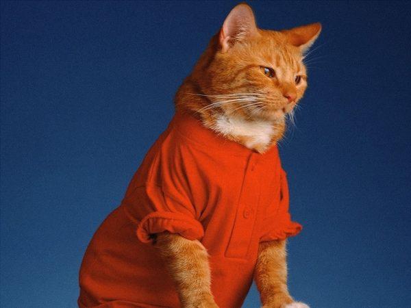 рыжий кот в ярко-оранжевой майке