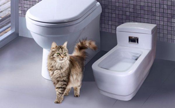 Фарфоровый туалет для кошек