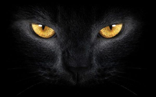 жёлтые глаза чёрной кошки