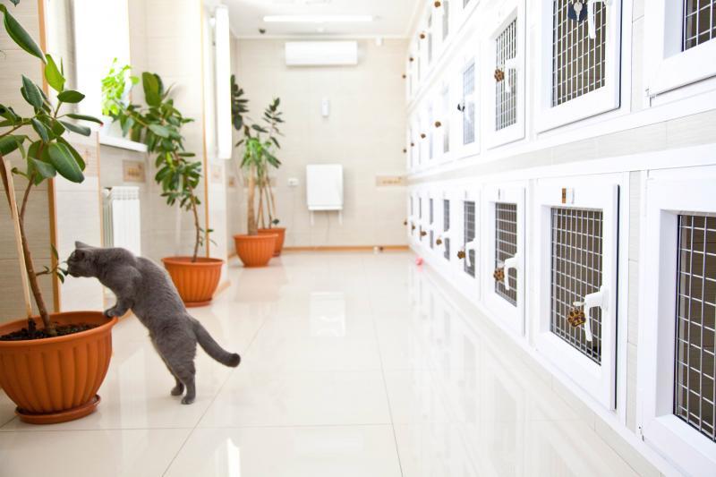 Кошачий отпуск: плюсы и минусы гостиниц для животных