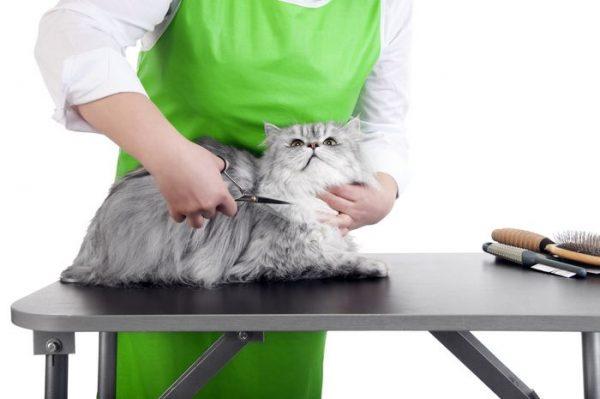 Груминг-мастер стрижёт серого кота