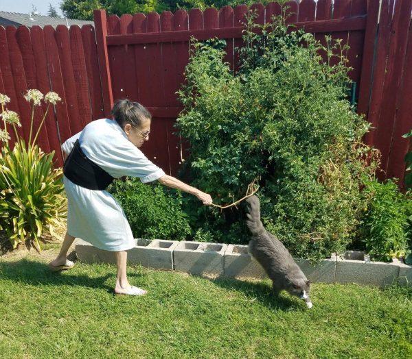 Хозяйка отгоняет кота от зеленых насаждений