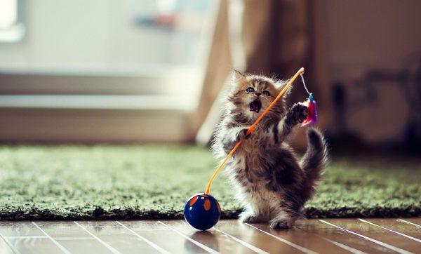 Играющийся котёнок