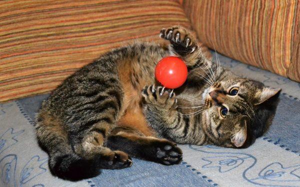 кошка играет с мячом