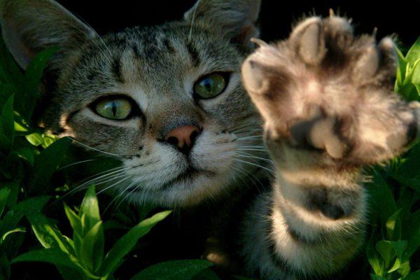 Кот вытянул лапку
