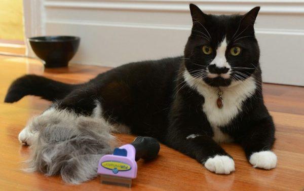 Кот и фурминатор