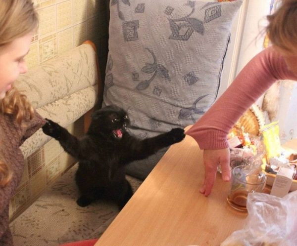 Разъярённый кот