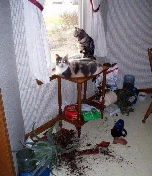 Коты и беспорядок