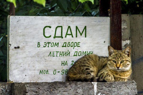 Кот и объявление