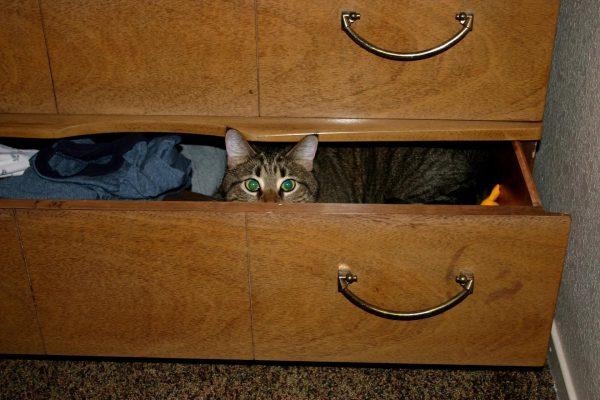Кот в комоде