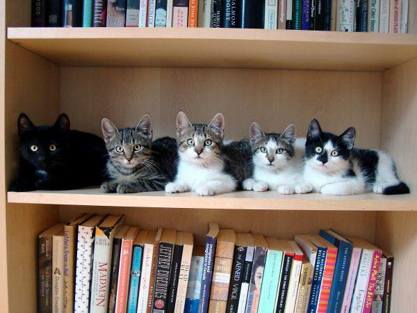 Котики на книжной полке