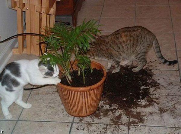 Коты и разорённый цветок